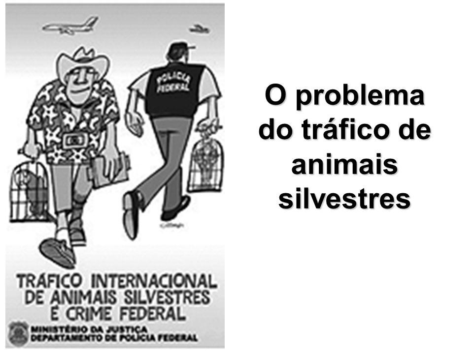 O problema do tráfico de animais silvestres