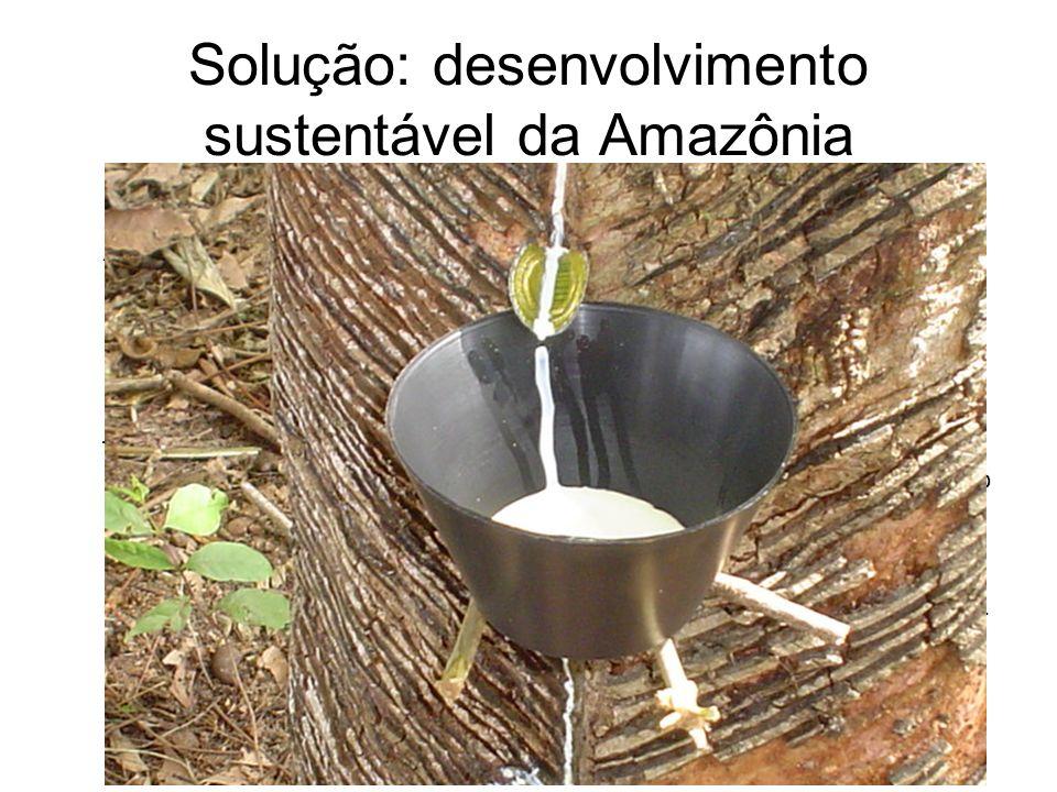 Solução: desenvolvimento sustentável da Amazônia Destinação das áreas griladas na região amazônica (que, de acordo com dados das CPI da Grilagem chegam a 100 milhões de hectares, ou 20% da Amazônia Legal) prioritariamente para a criação de áreas de proteção tais como parques, bem como Reservas Extrativistas e de uso sustentável; Implantação das unidades de conservação já aprovadas, mas que até hoje não saíram do papel; Redirecionamento do programa nacional de Reforma Agrária para áreas já desmatadas; Fortalecimento das instituições encarregadas da proteção ambiental como IBAMA e Secretarias Estaduais de Meio Ambiente; Adoção de mecanismos fiscais que penalizem a madeira proveniente de desmatamento e beneficiem exclusivamente a produção de madeira através de manejo florestal sustentável e passível de certificação pelo FSC.