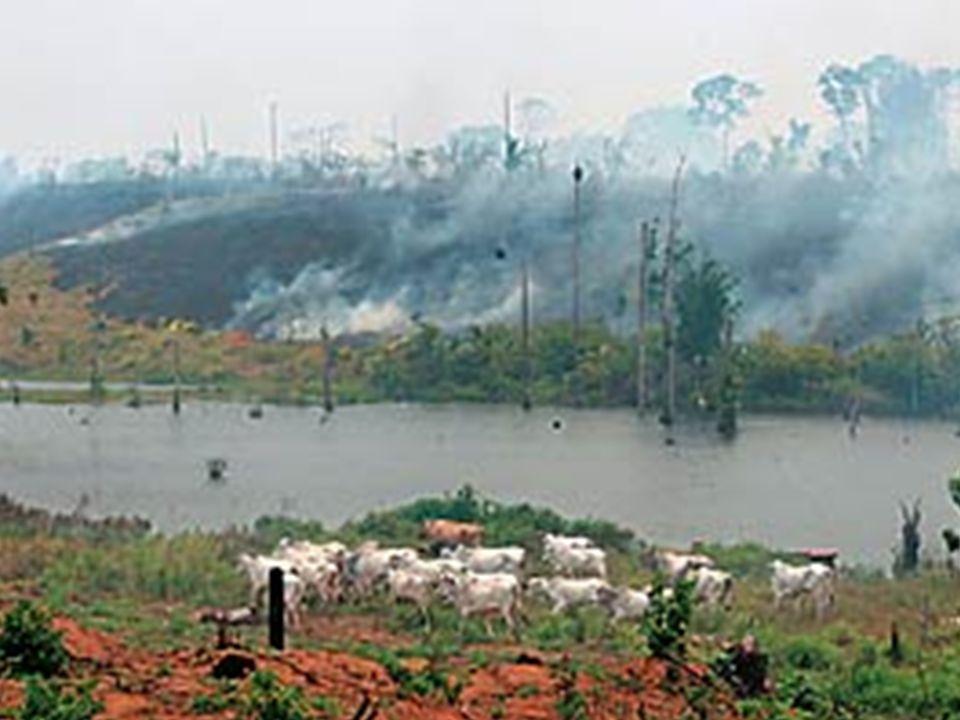 Imagens do desmatamento