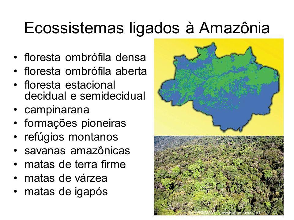 Ecossistemas ligados à Amazônia floresta ombrófila densa floresta ombrófila aberta floresta estacional decidual e semidecidual campinarana formações pioneiras refúgios montanos savanas amazônicas matas de terra firme matas de várzea matas de igapós