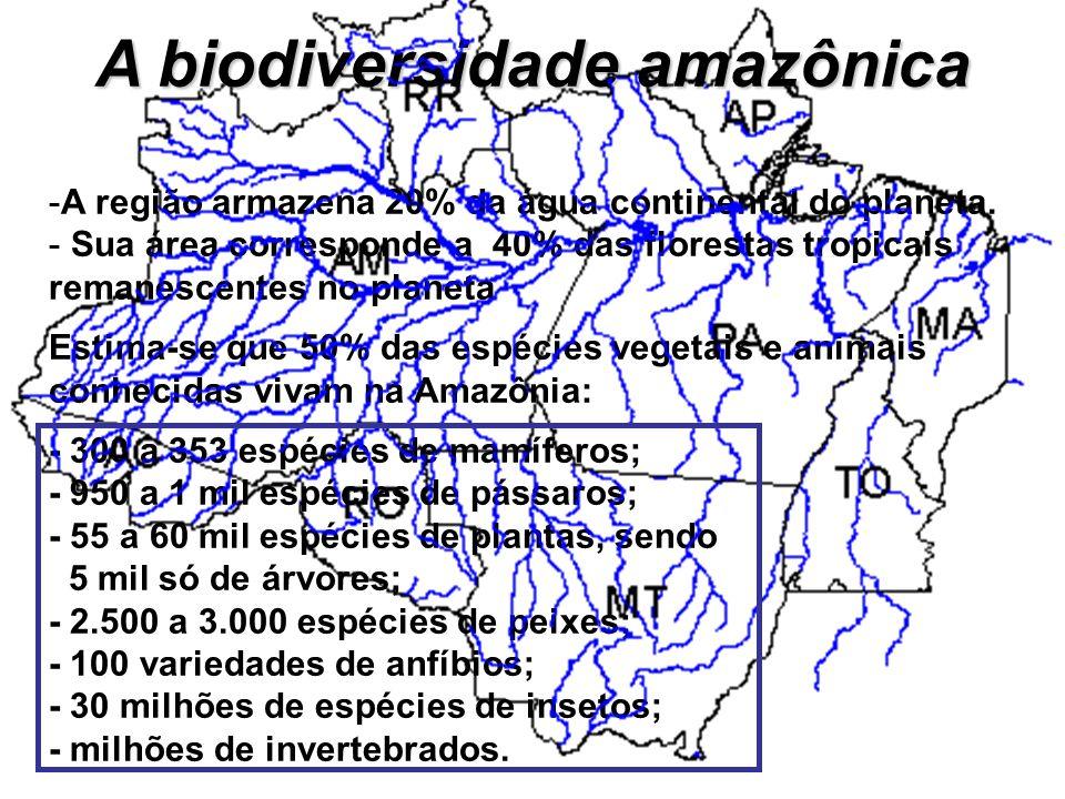 A biodiversidade amazônica -A região armazena 20% da água continental do planeta. - Sua área corresponde a 40% das florestas tropicais remanescentes n