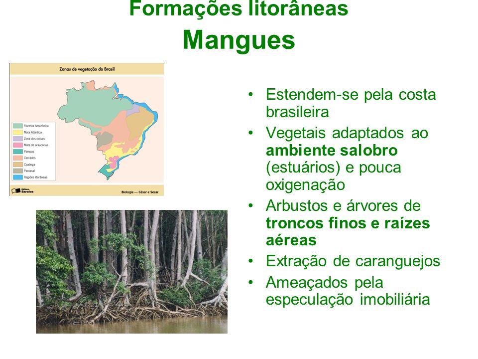 Formações litorâneas Mangues Estendem-se pela costa brasileira Vegetais adaptados ao ambiente salobro (estuários) e pouca oxigenação Arbustos e árvore