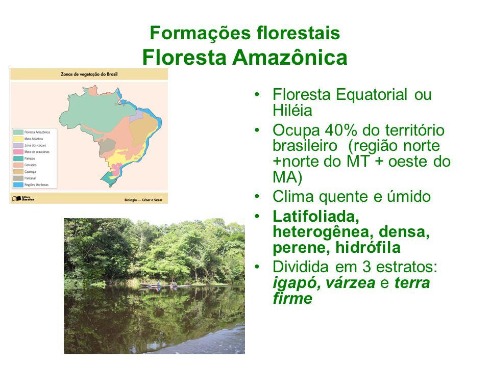 Formações florestais Floresta Amazônica Floresta Equatorial ou Hiléia Ocupa 40% do território brasileiro (região norte +norte do MT + oeste do MA) Cli