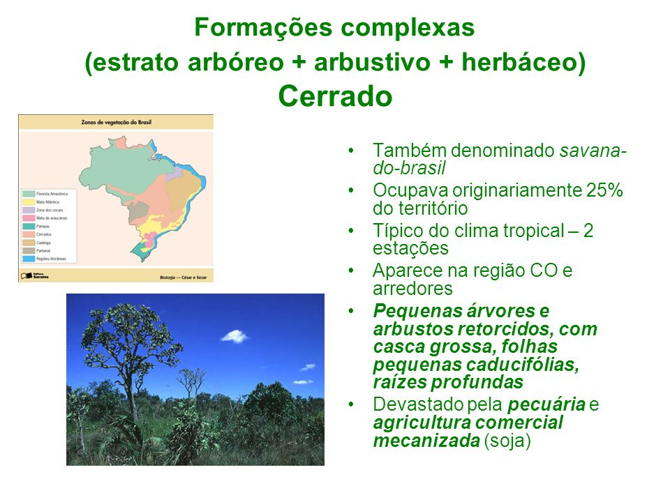 Formações complexas (estrato arbóreo + arbustivo + herbáceo) Cerrado Também denominado savana- do-brasil Ocupava originariamente 25% do território Típ