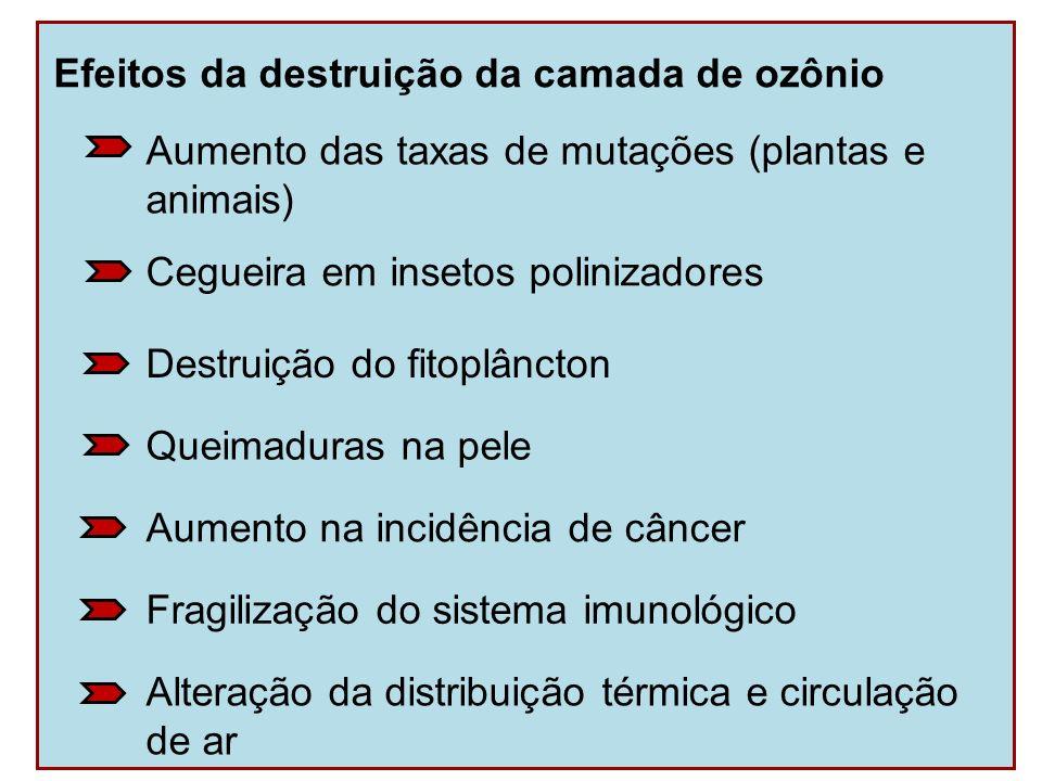 Efeitos da destruição da camada de ozônio Alteração da distribuição térmica e circulação de ar Fragilização do sistema imunológico Aumento na incidênc