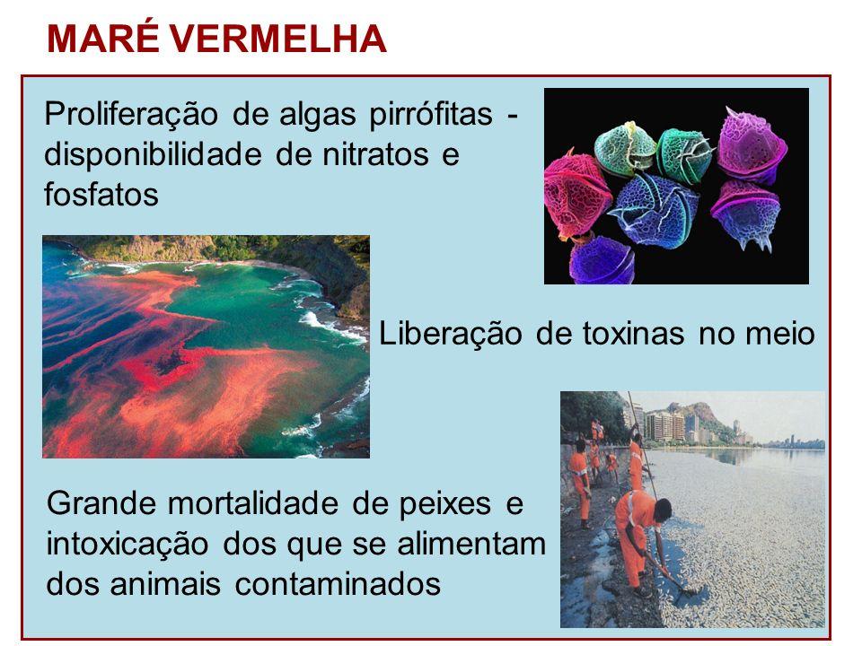 Proliferação de algas pirrófitas - disponibilidade de nitratos e fosfatos MARÉ VERMELHA Liberação de toxinas no meio Grande mortalidade de peixes e in