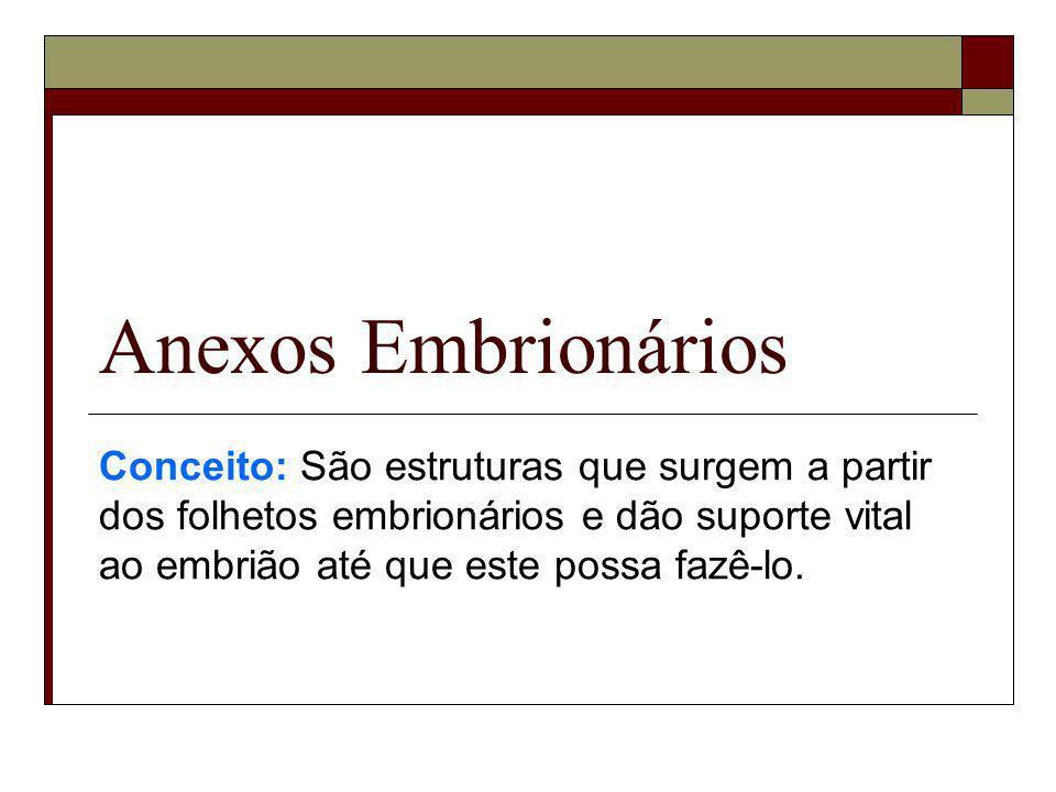 Anexos Embrionários Conceito: São estruturas que surgem a partir dos folhetos embrionários e dão suporte vital ao embrião até que este possa fazê-lo.