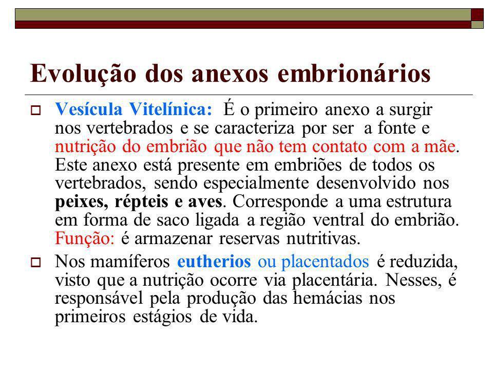 Evolução dos anexos embrionários Vesícula Vitelínica: É o primeiro anexo a surgir nos vertebrados e se caracteriza por ser a fonte e nutrição do embri