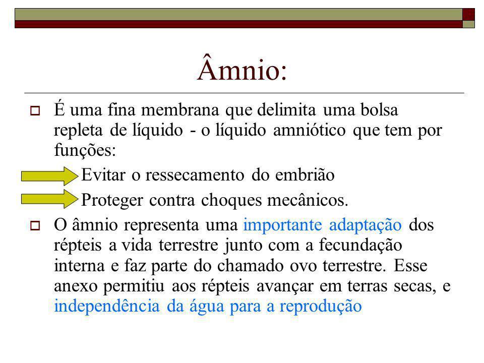 Âmnio: É uma fina membrana que delimita uma bolsa repleta de líquido - o líquido amniótico que tem por funções: · Evitar o ressecamento do embrião · P