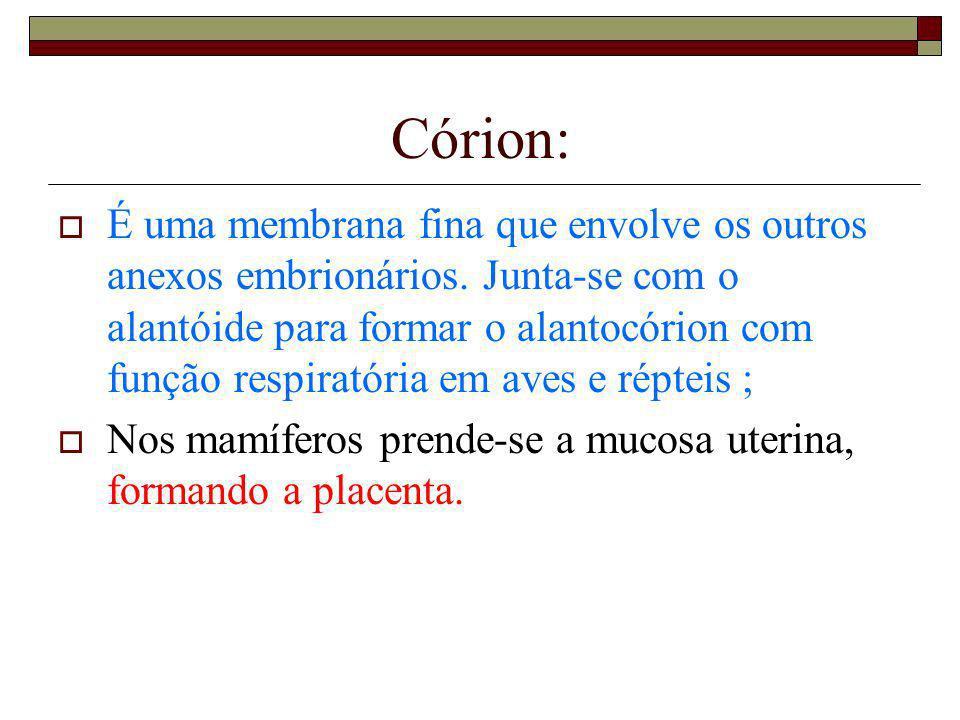 Córion: É uma membrana fina que envolve os outros anexos embrionários. Junta-se com o alantóide para formar o alantocórion com função respiratória em