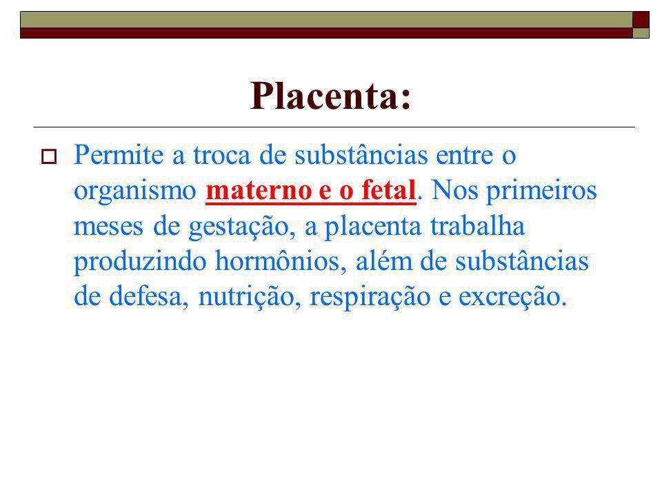 Placenta: Permite a troca de substâncias entre o organismo materno e o fetal. Nos primeiros meses de gestação, a placenta trabalha produzindo hormônio