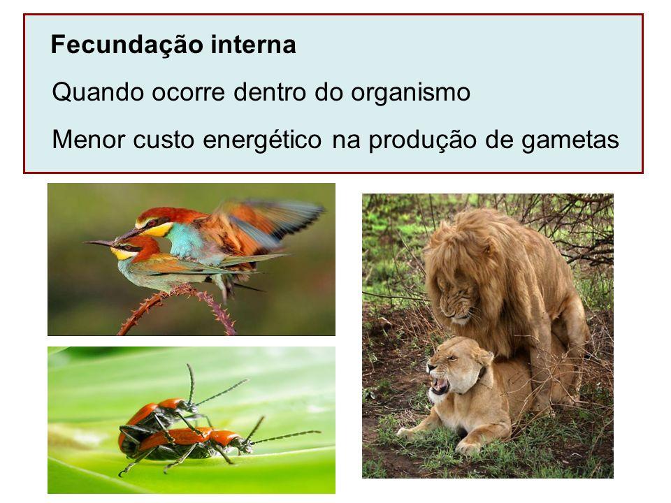 Fecundação interna Quando ocorre dentro do organismo Menor custo energético na produção de gametas