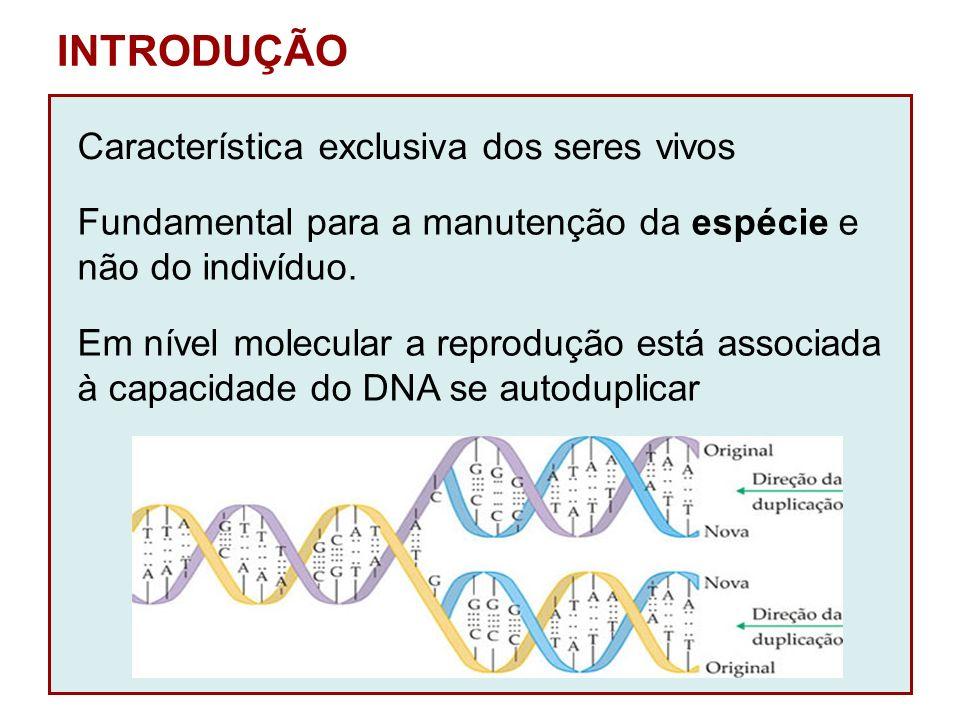 INTRODUÇÃO Característica exclusiva dos seres vivos Fundamental para a manutenção da espécie e não do indivíduo. Em nível molecular a reprodução está