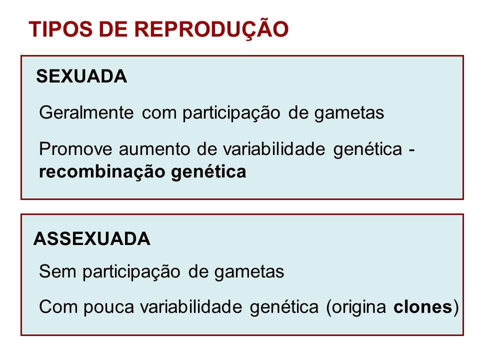 TIPOS DE REPRODUÇÃO SEXUADA Geralmente com participação de gametas Promove aumento de variabilidade genética - recombinação genética ASSEXUADA Sem par