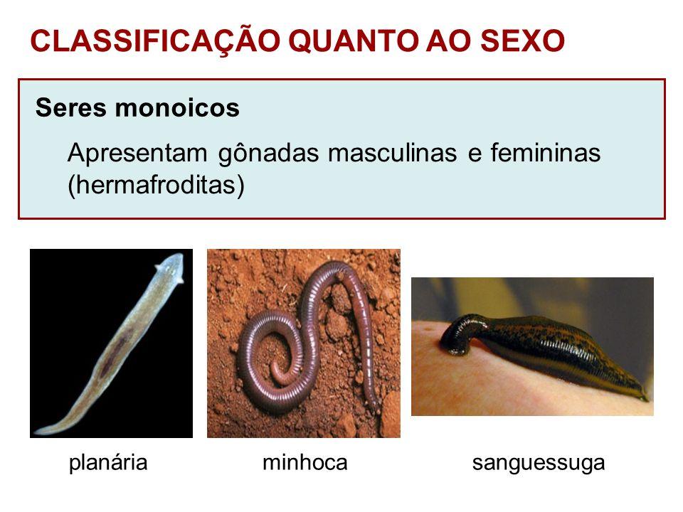 Seres monoicos Apresentam gônadas masculinas e femininas (hermafroditas) CLASSIFICAÇÃO QUANTO AO SEXO planáriaminhocasanguessuga