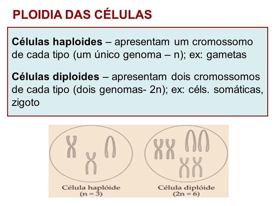 PLOIDIA DAS CÉLULAS Células haploides – apresentam um cromossomo de cada tipo (um único genoma – n); ex: gametas Células diploides – apresentam dois c