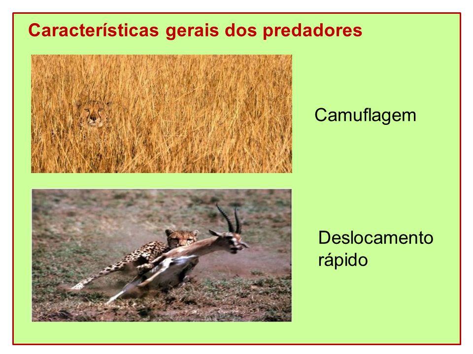 Características gerais dos predadores Camuflagem Deslocamento rápido