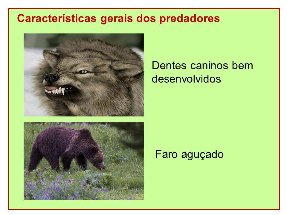 Características gerais dos predadores Dentes caninos bem desenvolvidos Faro aguçado