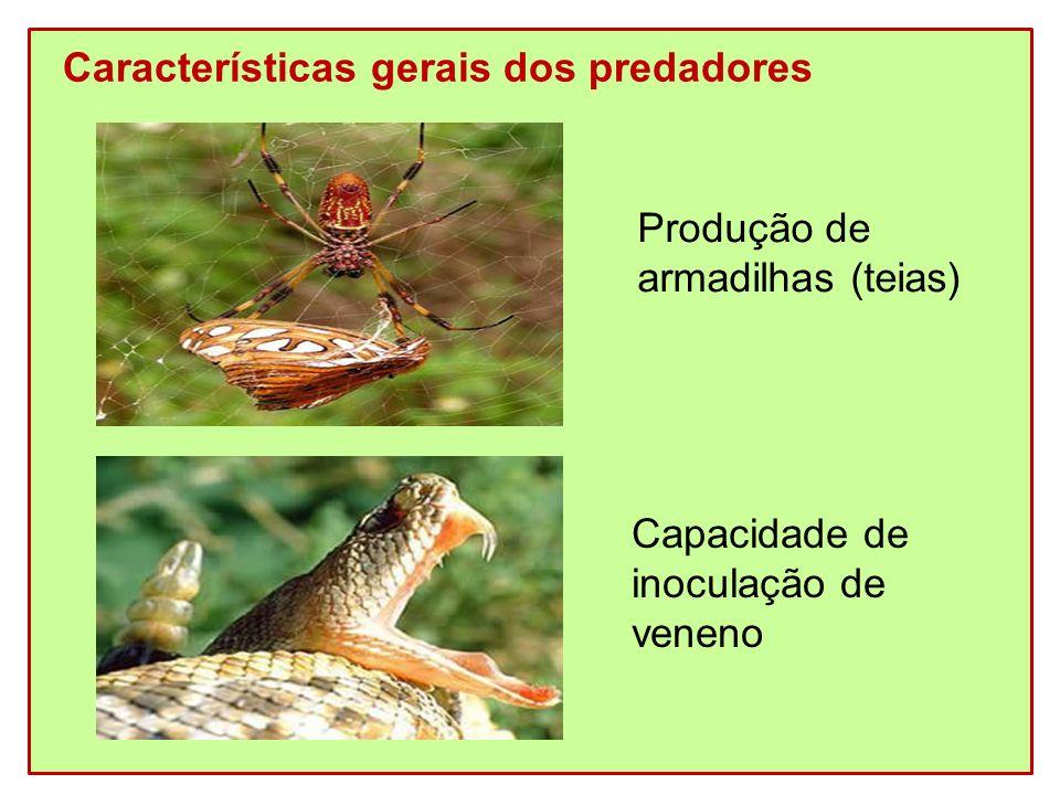 Características gerais dos predadores Produção de armadilhas (teias) Capacidade de inoculação de veneno