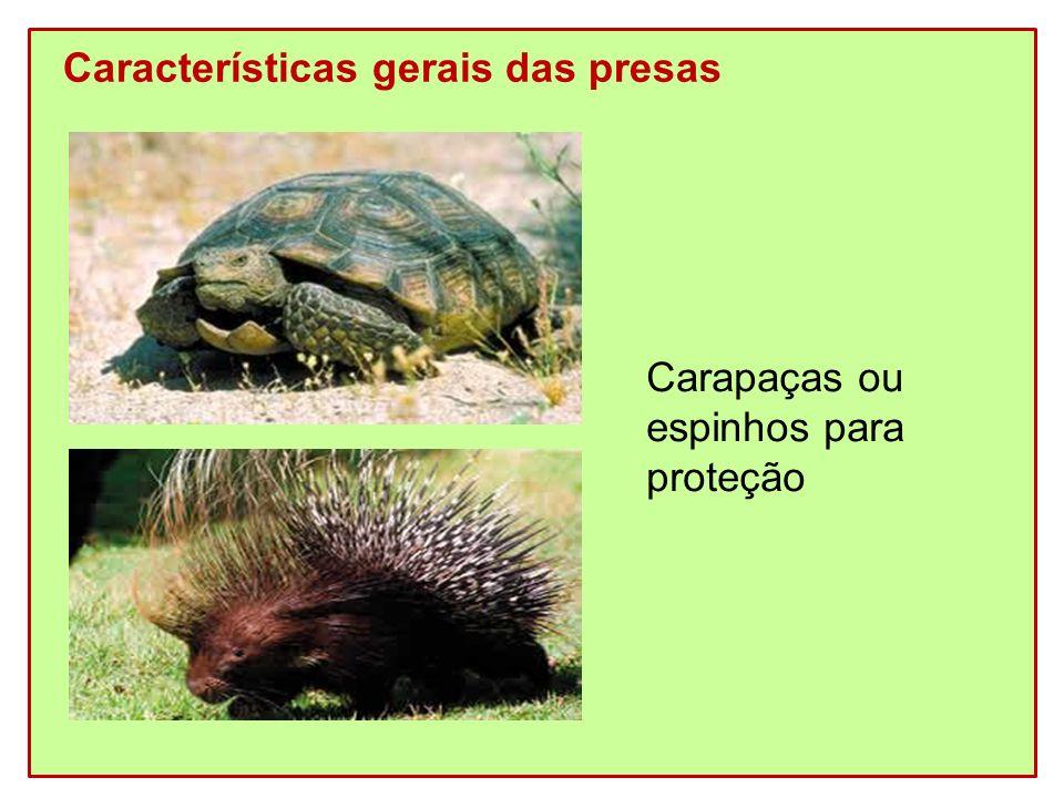 Características gerais das presas Carapaças ou espinhos para proteção