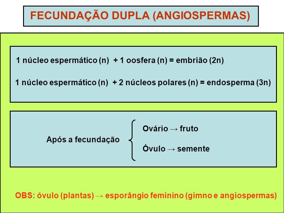 FECUNDAÇÃO DUPLA (ANGIOSPERMAS) 1 núcleo espermático (n) + 1 oosfera (n) = embrião (2n) 1 núcleo espermático (n) + 2 núcleos polares (n) = endosperma