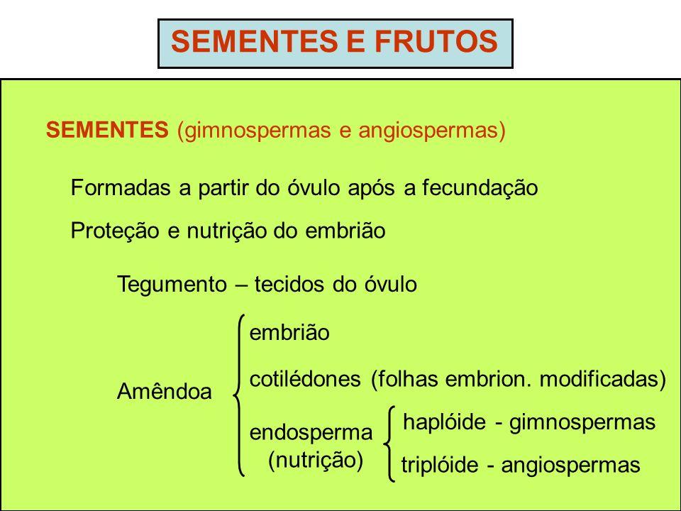 SEMENTES E FRUTOS SEMENTES (gimnospermas e angiospermas) Formadas a partir do óvulo após a fecundação Tegumento – tecidos do óvulo embrião cotilédones