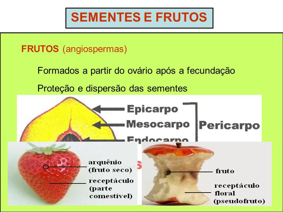 SEMENTES E FRUTOS FRUTOS (angiospermas) Formados a partir do ovário após a fecundação Proteção e dispersão das sementes Frutos partenocárpicos – desen