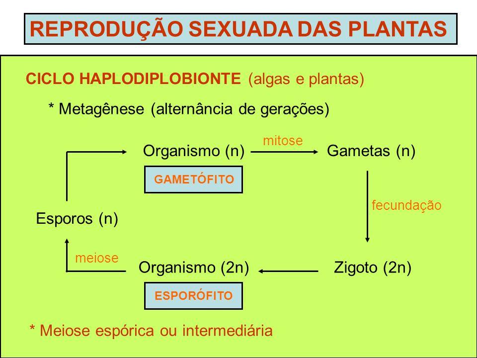 CICLO HAPLODIPLOBIONTE (algas e plantas) * Metagênese (alternância de gerações) REPRODUÇÃO SEXUADA DAS PLANTAS * Meiose espórica ou intermediária Zigo