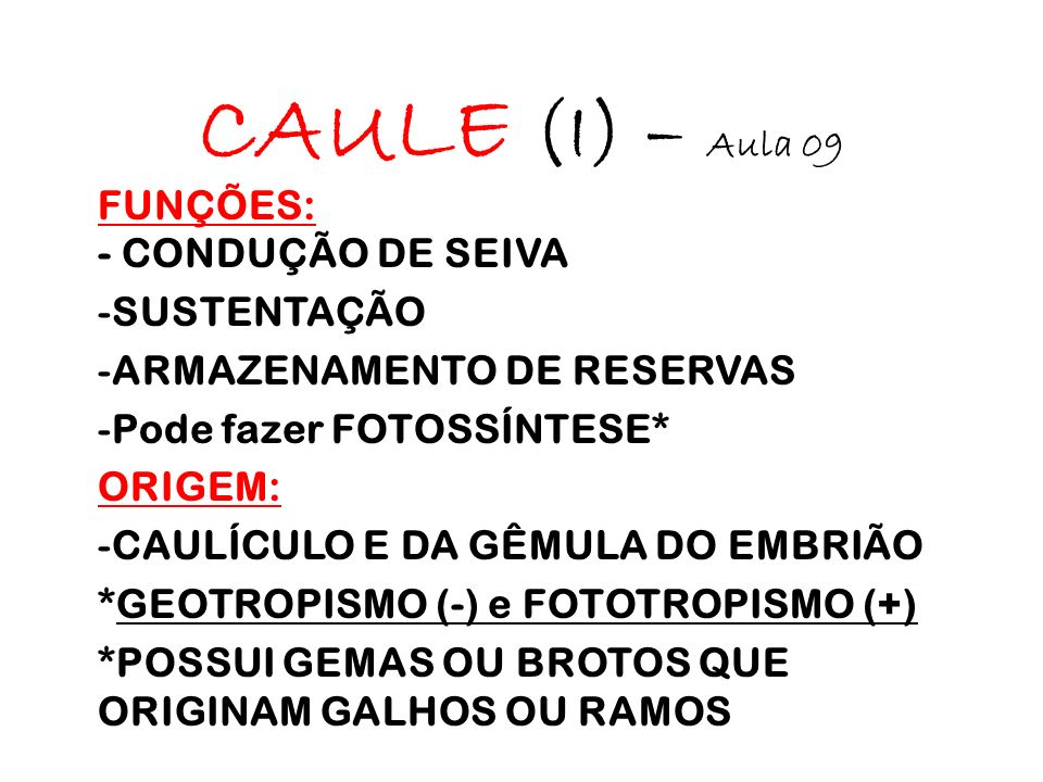 CAULE (I) – Aula 09 FUNÇÕES: - CONDUÇÃO DE SEIVA -SUSTENTAÇÃO -ARMAZENAMENTO DE RESERVAS -Pode fazer FOTOSSÍNTESE* ORIGEM: -CAULÍCULO E DA GÊMULA DO EMBRIÃO *GEOTROPISMO (-) e FOTOTROPISMO (+) *POSSUI GEMAS OU BROTOS QUE ORIGINAM GALHOS OU RAMOS
