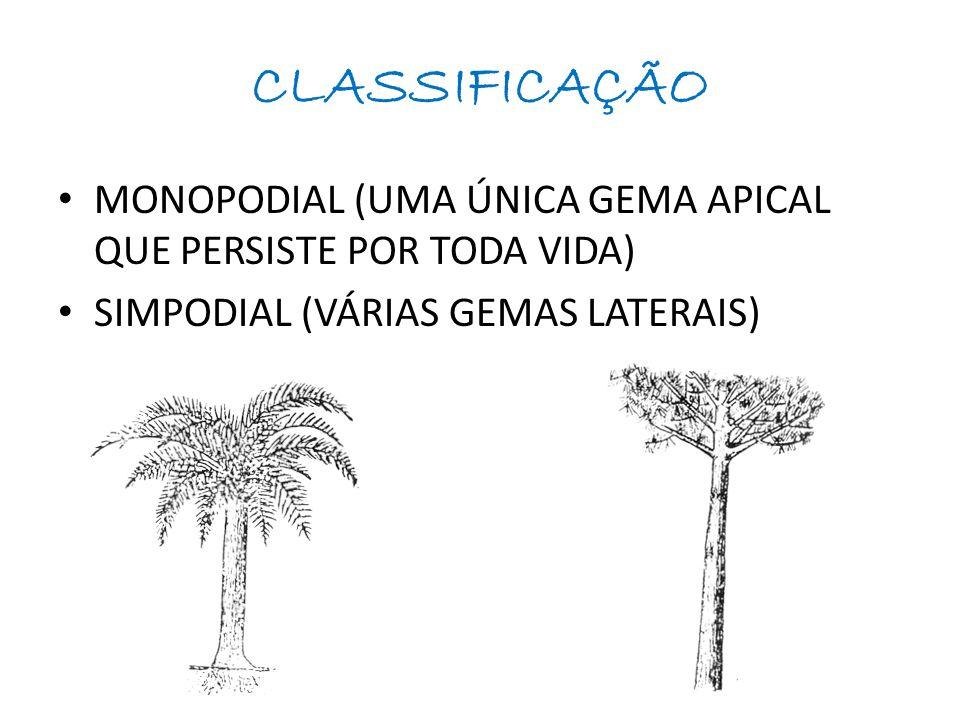 CLASSIFICAÇÃO MONOPODIAL (UMA ÚNICA GEMA APICAL QUE PERSISTE POR TODA VIDA) SIMPODIAL (VÁRIAS GEMAS LATERAIS)