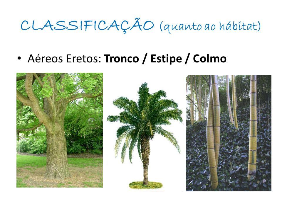 CLASSIFICAÇÃO (quanto ao hábitat) Aéreos Eretos: Tronco / Estipe / Colmo
