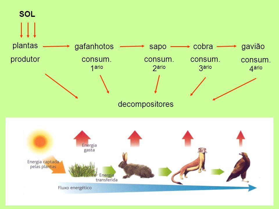 plantas gafanhotossapocobragavião produtorconsum. 1 ário consum. 2 ário consum. 3 ário consum. 4 ário decompositores SOL