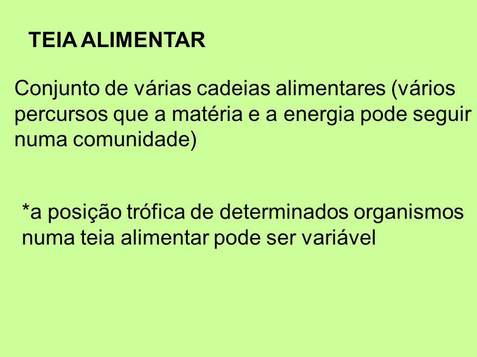 TEIA ALIMENTAR Conjunto de várias cadeias alimentares (vários percursos que a matéria e a energia pode seguir numa comunidade) *a posição trófica de d