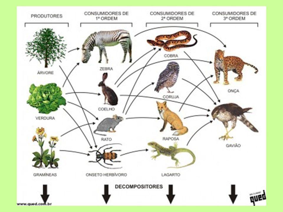 PIRÂMIDES ECOLÓGICAS 1000 plantas 100 gafanhotos 20 sapos 10 cobras 5 gaviões Numérica (predador-presa) 1 planta 200 pulgões 100000 protozoários 200000 bactérias Numérica invertida (parasita-hospedeiro)