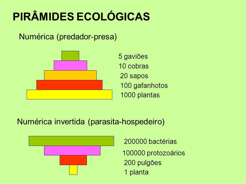 PIRÂMIDES ECOLÓGICAS 1000 plantas 100 gafanhotos 20 sapos 10 cobras 5 gaviões Numérica (predador-presa) 1 planta 200 pulgões 100000 protozoários 20000