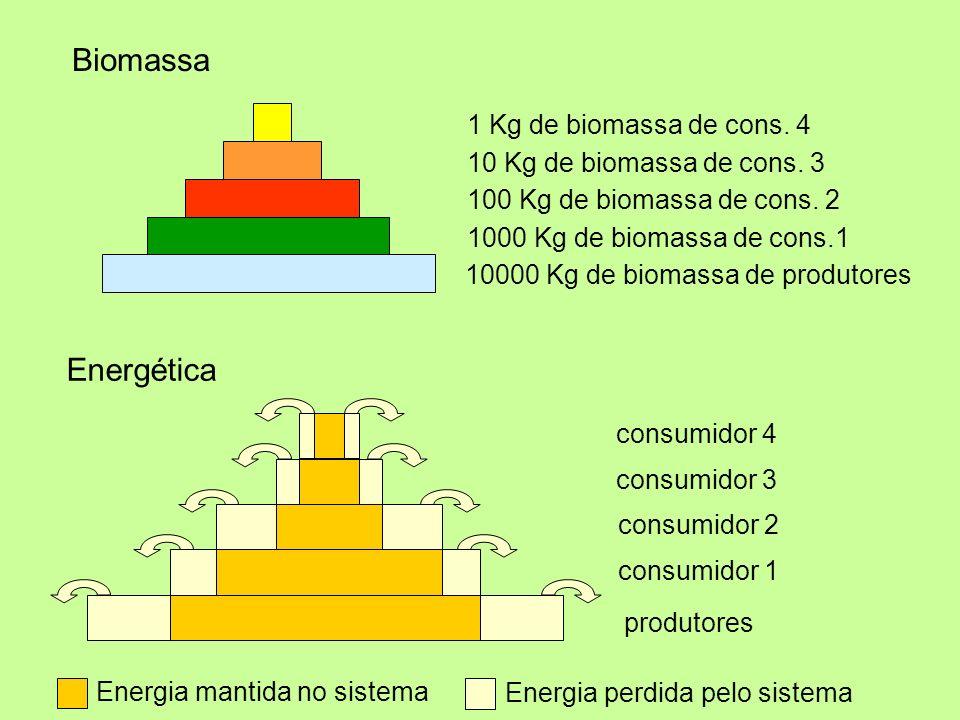 10000 Kg de biomassa de produtores 1000 Kg de biomassa de cons.1 100 Kg de biomassa de cons. 2 10 Kg de biomassa de cons. 3 1 Kg de biomassa de cons.