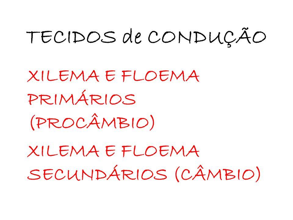 TECIDOS de CONDUÇÃO XILEMA E FLOEMA PRIMÁRIOS (PROCÂMBIO) XILEMA E FLOEMA SECUNDÁRIOS (CÂMBIO)