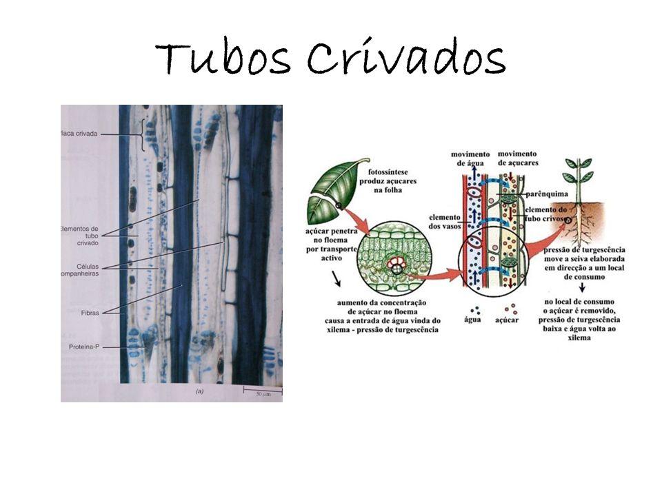 Tubos Crivados