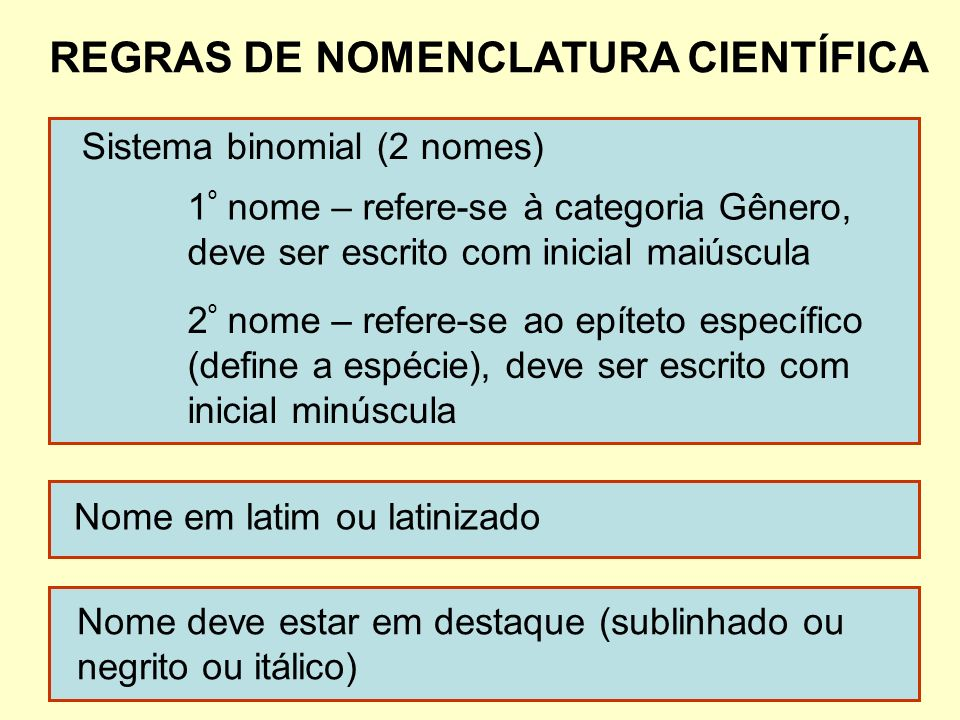 REGRAS DE NOMENCLATURA CIENTÍFICA Sistema binomial (2 nomes) 1 º nome – refere-se à categoria Gênero, deve ser escrito com inicial maiúscula 2 º nome