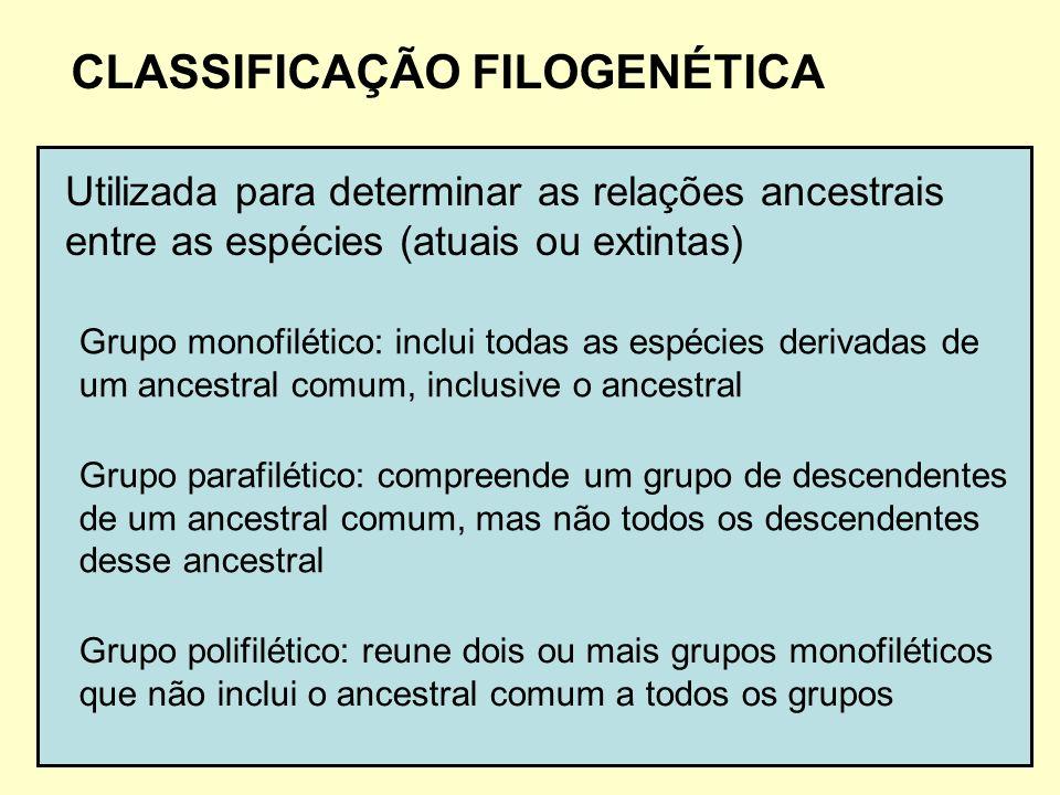 CLASSIFICAÇÃO FILOGENÉTICA Utilizada para determinar as relações ancestrais entre as espécies (atuais ou extintas) Grupo monofilético: inclui todas as