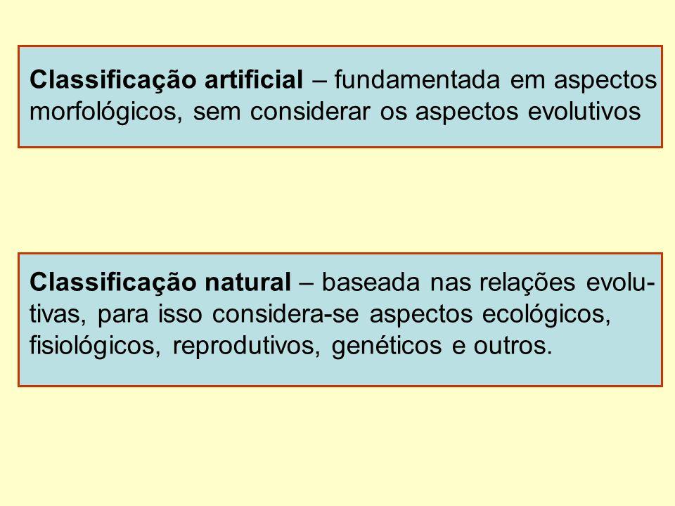 Classificação artificial – fundamentada em aspectos morfológicos, sem considerar os aspectos evolutivos Classificação natural – baseada nas relações e