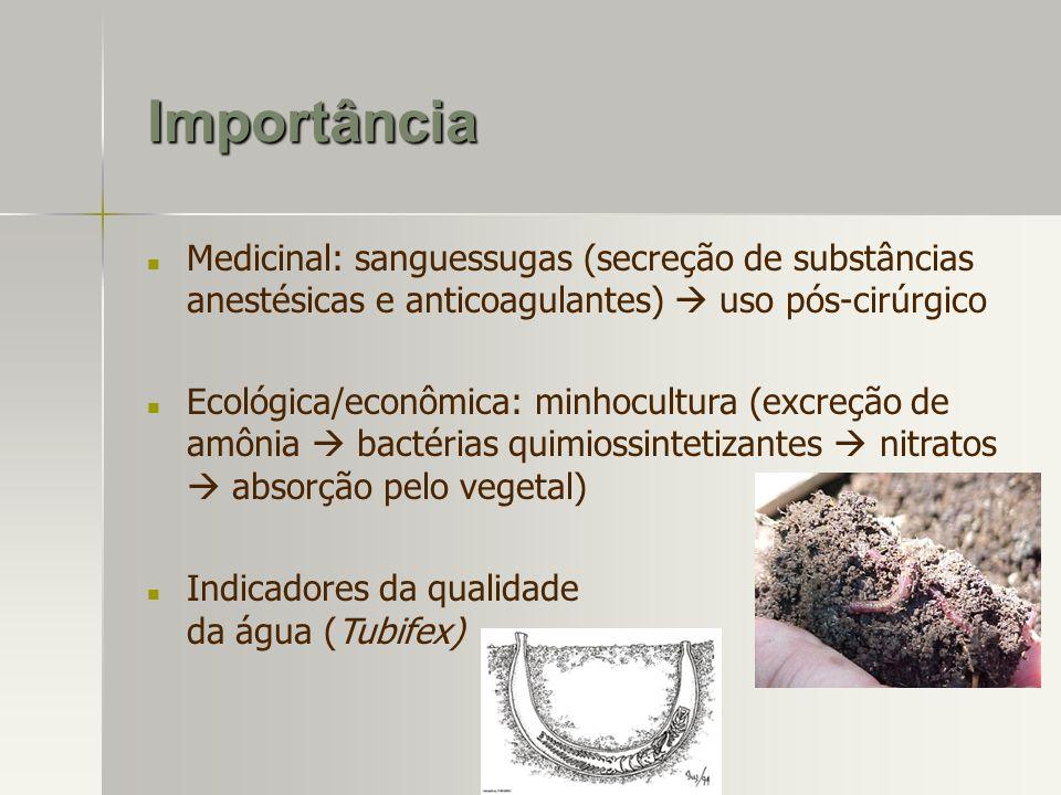 Importância Medicinal: sanguessugas (secreção de substâncias anestésicas e anticoagulantes) uso pós-cirúrgico Ecológica/econômica: minhocultura (excre