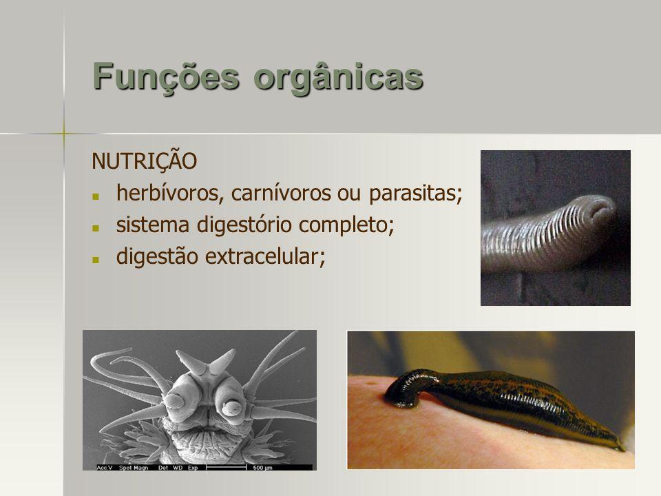Funções orgânicas NUTRIÇÃO herbívoros, carnívoros ou parasitas; sistema digestório completo; digestão extracelular;