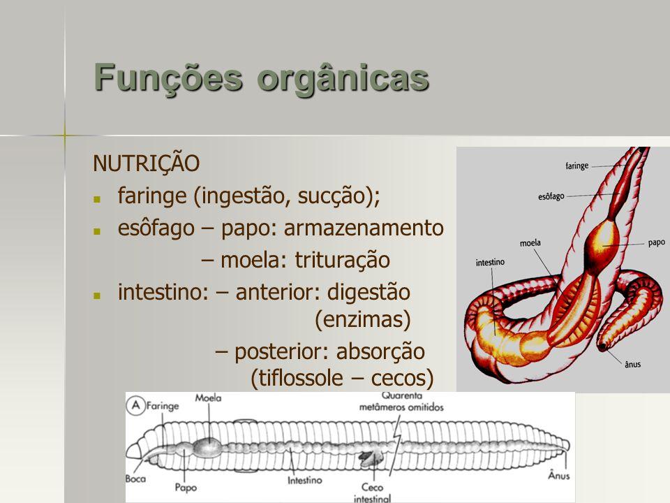 Funções orgânicas NUTRIÇÃO faringe (ingestão, sucção); esôfago – papo: armazenamento – moela: trituração intestino: – anterior: digestão (enzimas) – p
