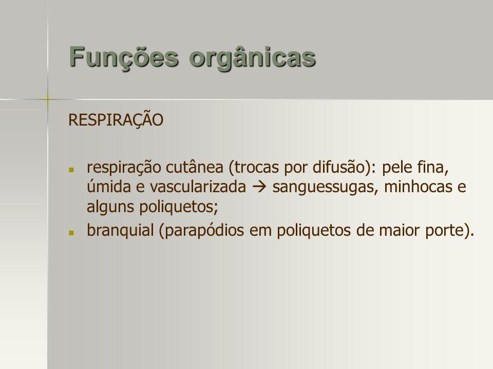 Funções orgânicas RESPIRAÇÃO respiração cutânea (trocas por difusão): pele fina, úmida e vascularizada sanguessugas, minhocas e alguns poliquetos; bra