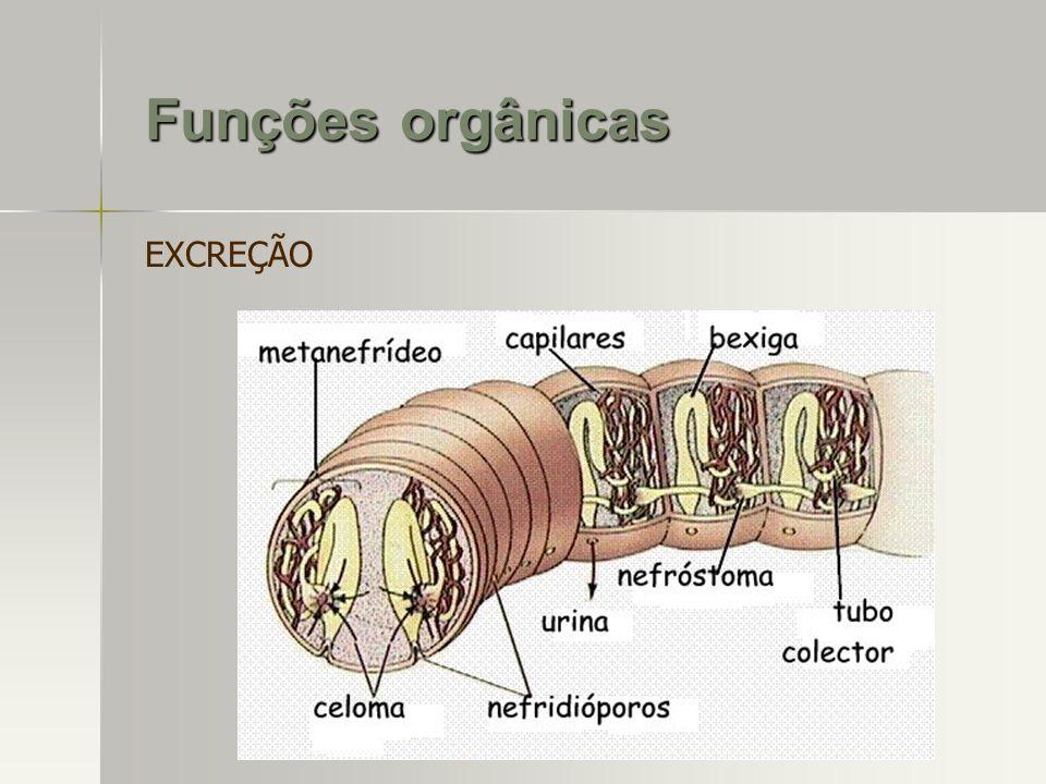 EXCREÇÃO Funções orgânicas