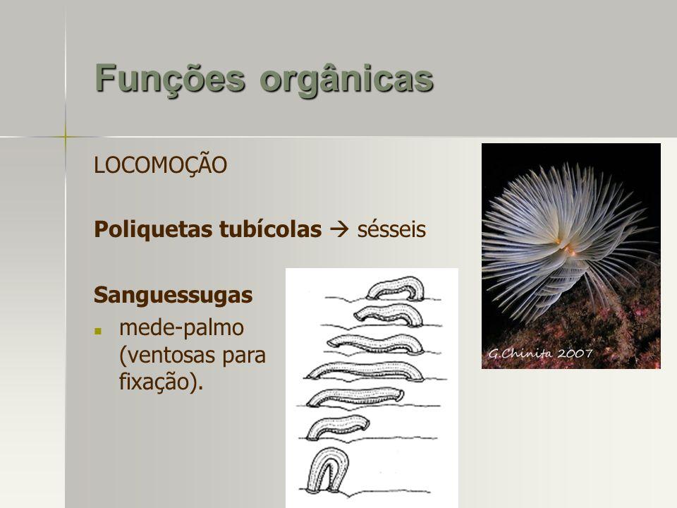 LOCOMOÇÃO Poliquetas tubícolas sésseis Sanguessugas mede-palmo (ventosas para fixação). Funções orgânicas