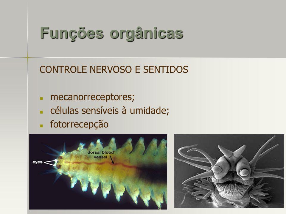 Funções orgânicas CONTROLE NERVOSO E SENTIDOS mecanorreceptores; células sensíveis à umidade; fotorrecepção