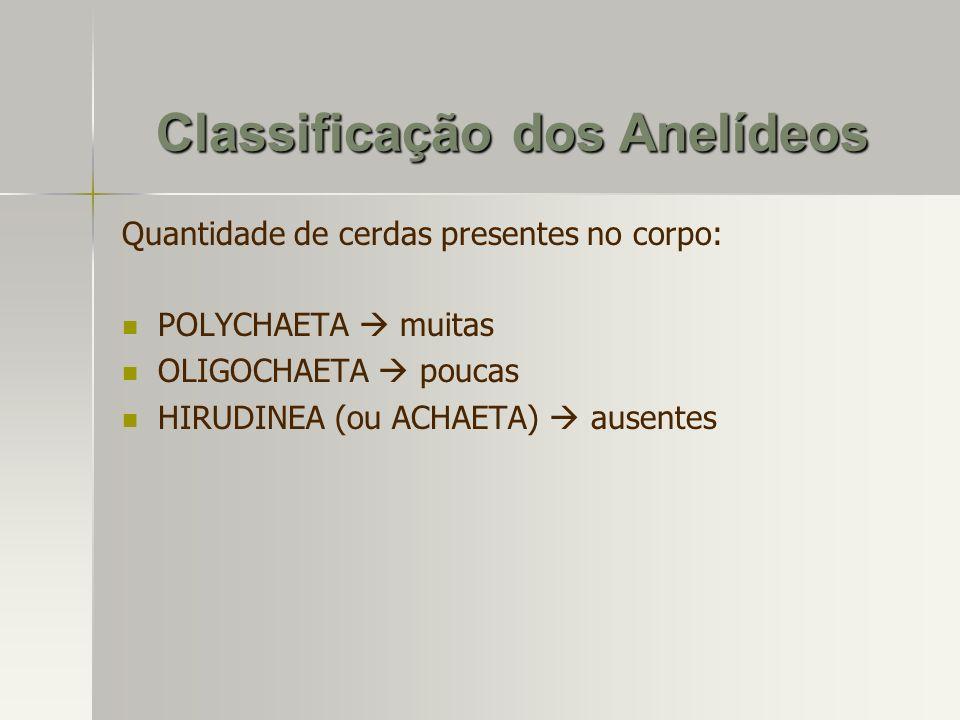 Classificação dos Anelídeos Quantidade de cerdas presentes no corpo: POLYCHAETA muitas OLIGOCHAETA poucas HIRUDINEA (ou ACHAETA) ausentes