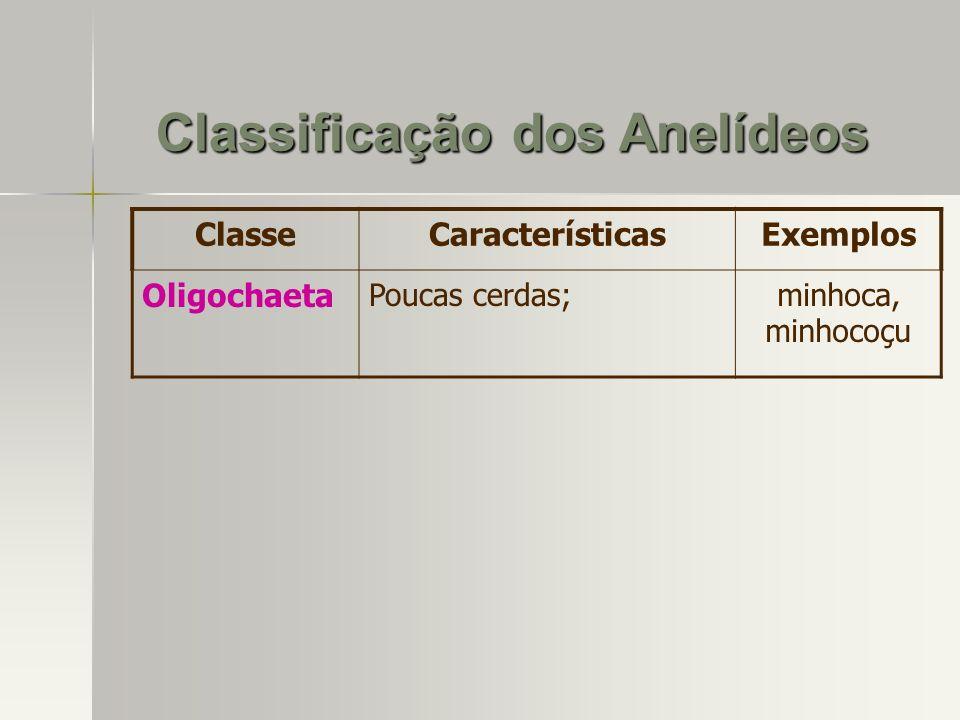 ClasseCaracterísticasExemplos Oligochaeta Poucas cerdas;minhoca, minhocoçu Classificação dos Anelídeos
